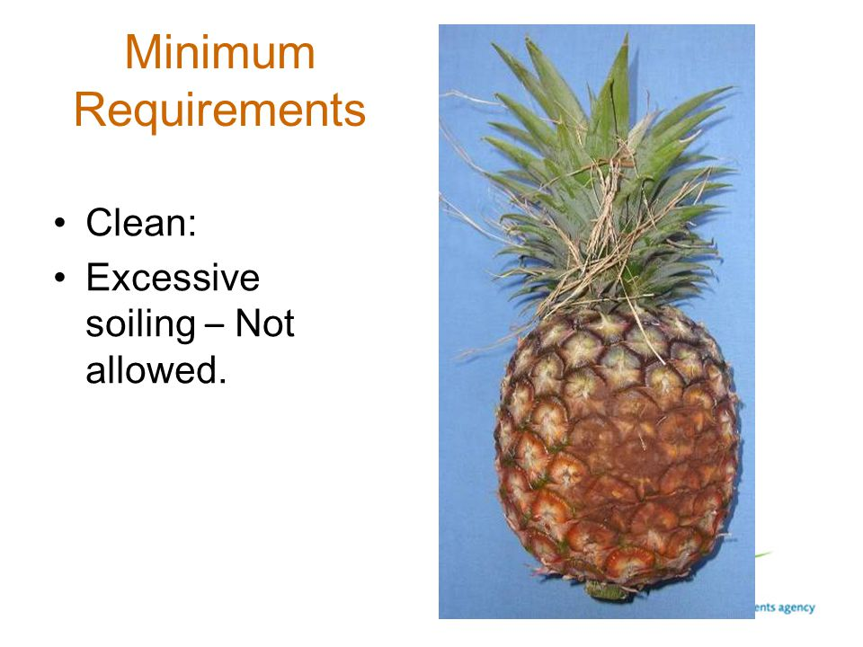 Minimum Requirements Clean: Excessive soiling – Not allowed.