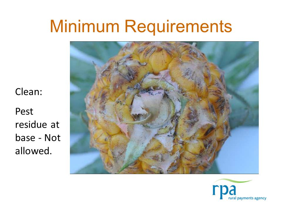 Minimum Requirements Clean: Pest residue at base - Not allowed.