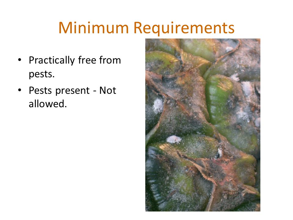 Minimum Requirements Practically free from pests. Pests present - Not allowed.