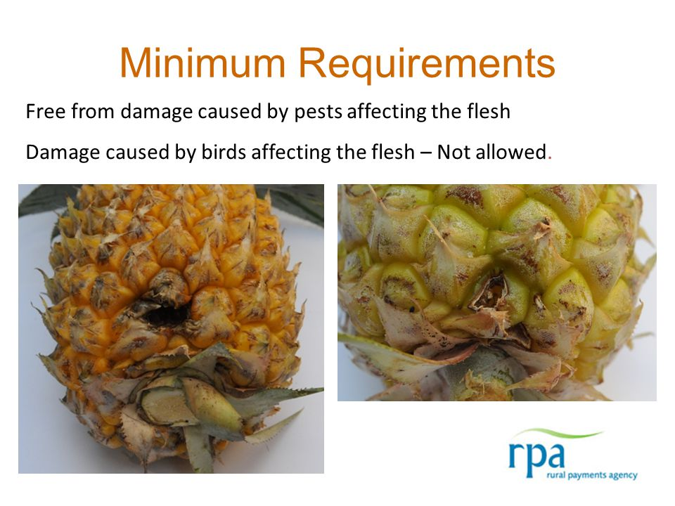 Minimum Requirements Free from damage caused by pests affecting the flesh Damage caused by birds affecting the flesh – Not allowed.