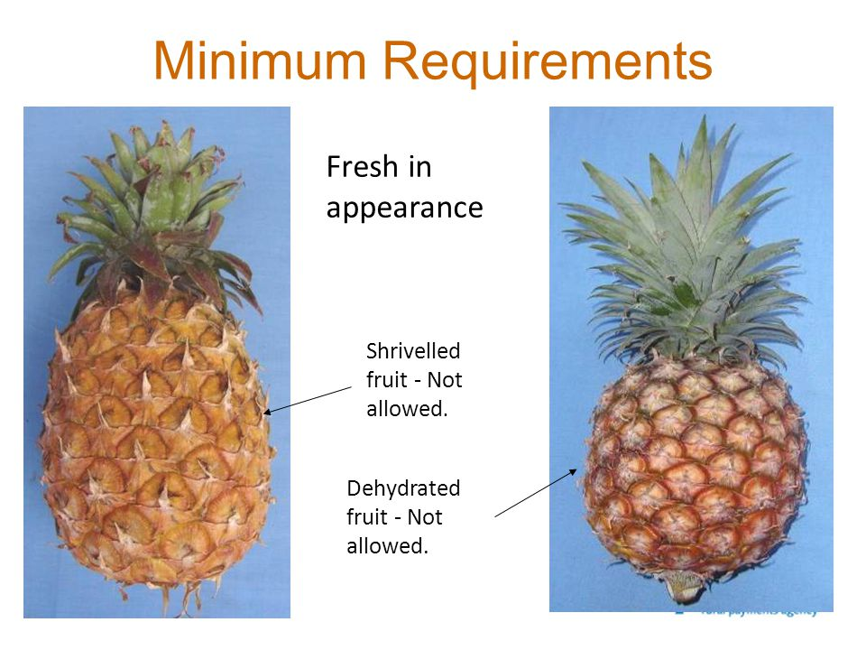 Minimum Requirements Fresh in appearance Shrivelled fruit - Not allowed. Dehydrated fruit - Not allowed.