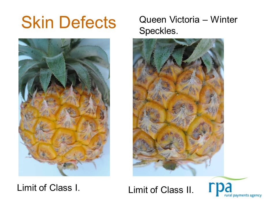Skin Defects Limit of Class I. Limit of Class II. Queen Victoria – Winter Speckles.