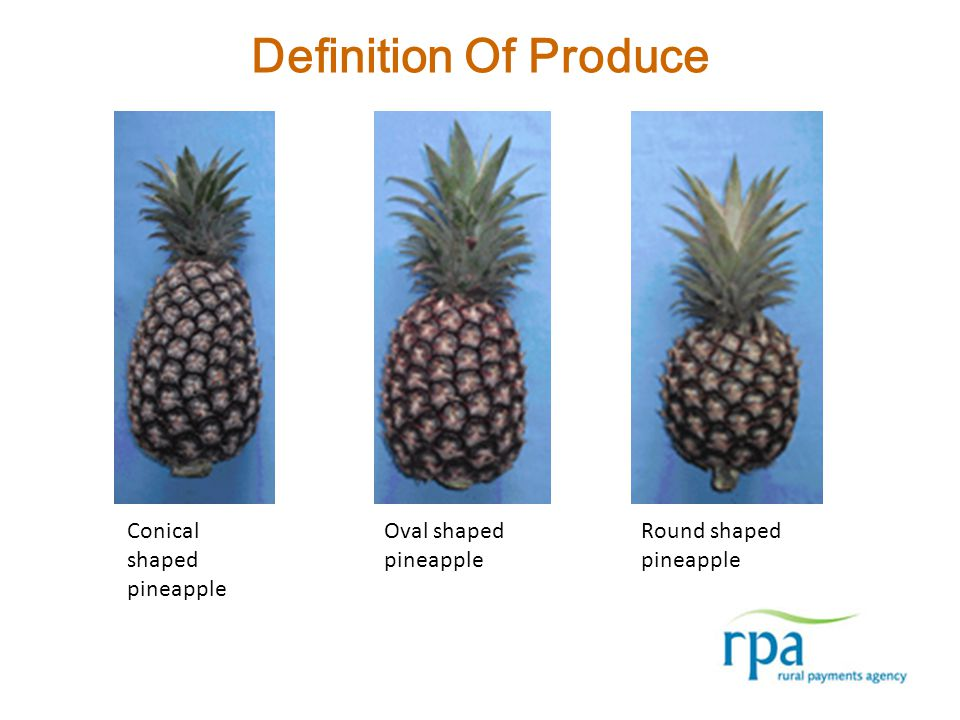 Definition Of Produce Conical shaped pineapple Oval shaped pineapple Round shaped pineapple
