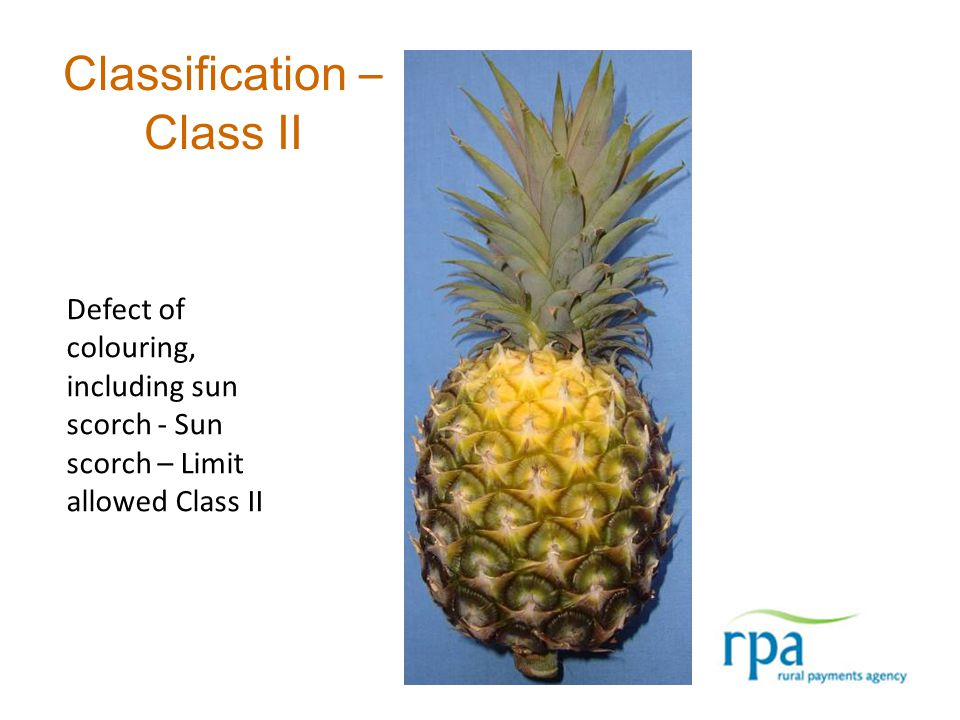 Classification – Class II Defect of colouring, including sun scorch - Sun scorch – Limit allowed Class II