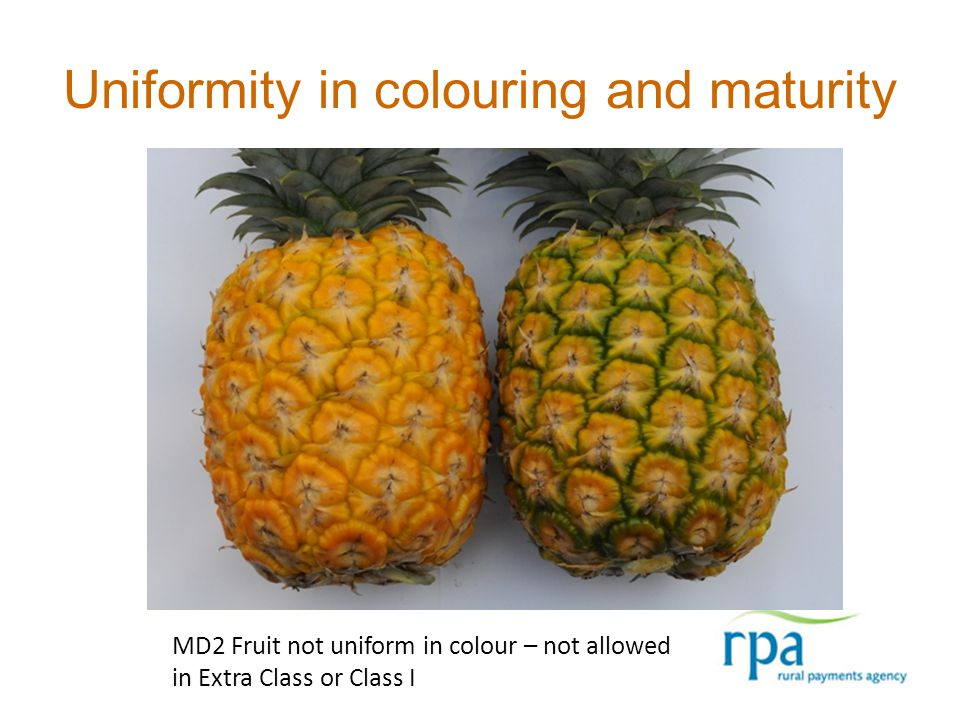 Uniformity in colouring and maturity MD2 Fruit not uniform in colour – not allowed in Extra Class or Class I