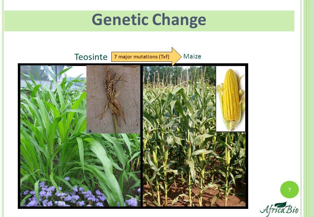 7 Maize Teosinte 7 major mutations (Txf) Genetic Change