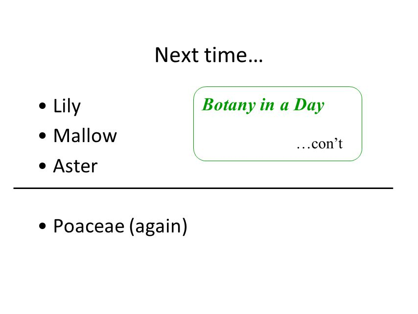 Next time… Lily Mallow Aster Poaceae (again) Botany in a Day …con't
