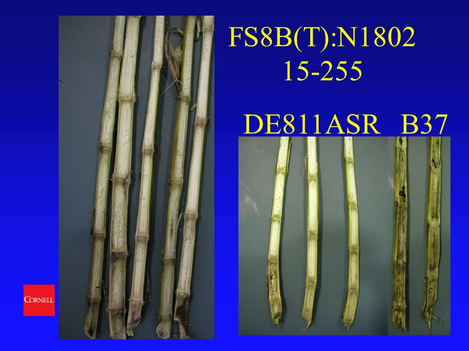 College of Agriculture and Life Sciences Department of Plant Breeding FS8B(T):N1802 15-255 DE811ASR B37