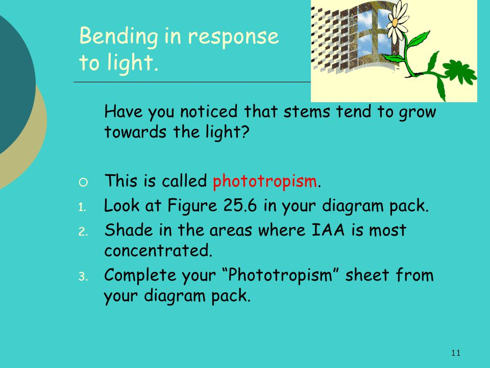 11 Bending in response to light. Have you noticed that stems tend to grow towards the light?  This is called phototropism. 1. Look at Figure 25.6 in