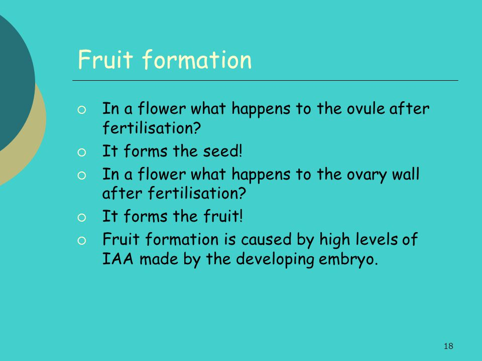 18 Fruit formation  In a flower what happens to the ovule after fertilisation?  It forms the seed!  In a flower what happens to the ovary wall afte