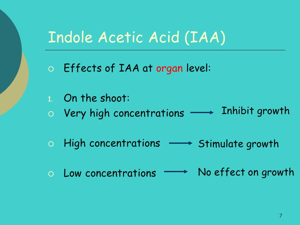 7 Indole Acetic Acid (IAA)  Effects of IAA at organ level: 1. On the shoot:  Very high concentrations  High concentrations  Low concentrations Inh