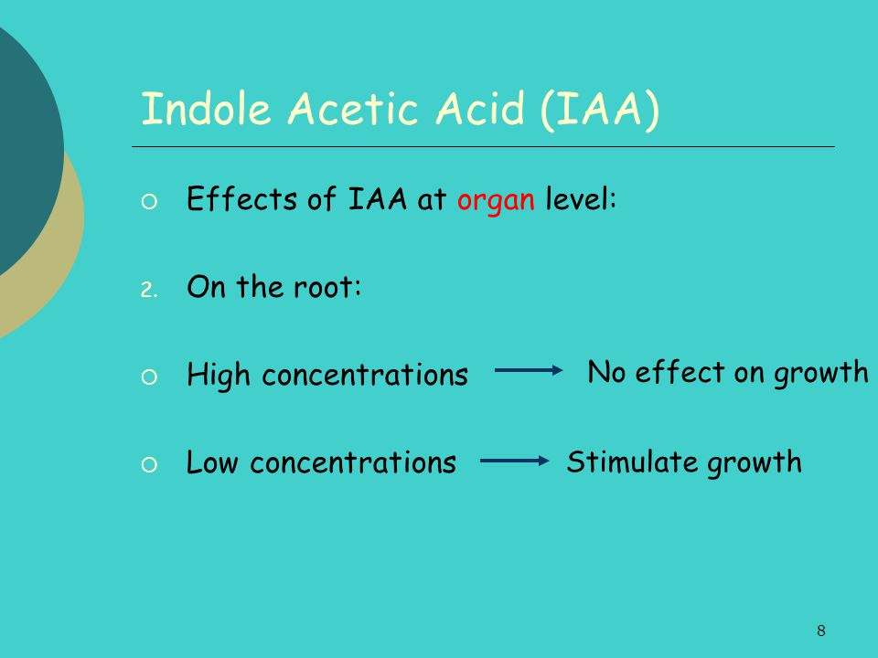 8 Indole Acetic Acid (IAA)  Effects of IAA at organ level: 2. On the root:  High concentrations  Low concentrations Stimulate growth No effect on g