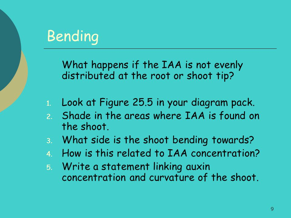 9 Bending What happens if the IAA is not evenly distributed at the root or shoot tip? 1. Look at Figure 25.5 in your diagram pack. 2. Shade in the are