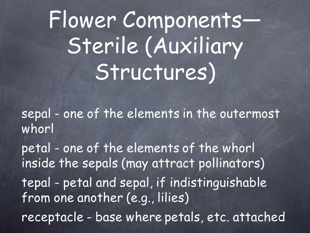 Flower Components— Sterile (Auxiliary Structures) petal - one of the elements of the whorl inside the sepals (may attract pollinators) sepal - one of