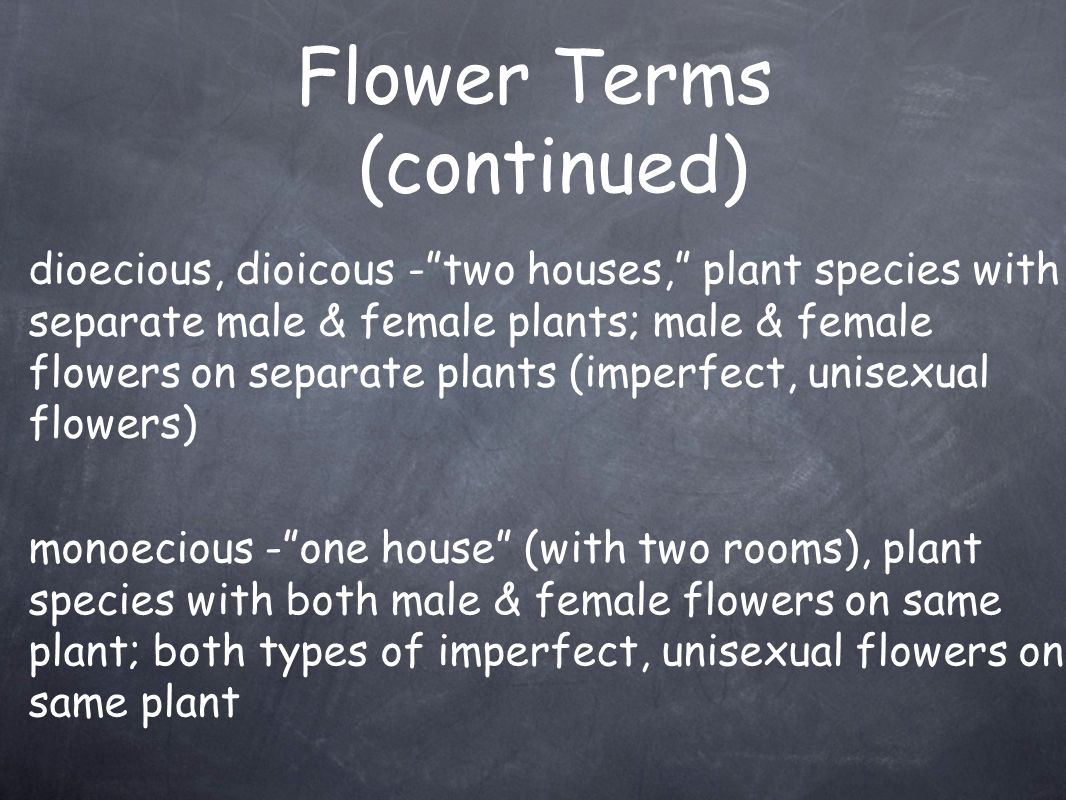 "Flower Terms (continued) dioecious, dioicous -""two houses,"" plant species with separate male & female plants; male & female flowers on separate plants"