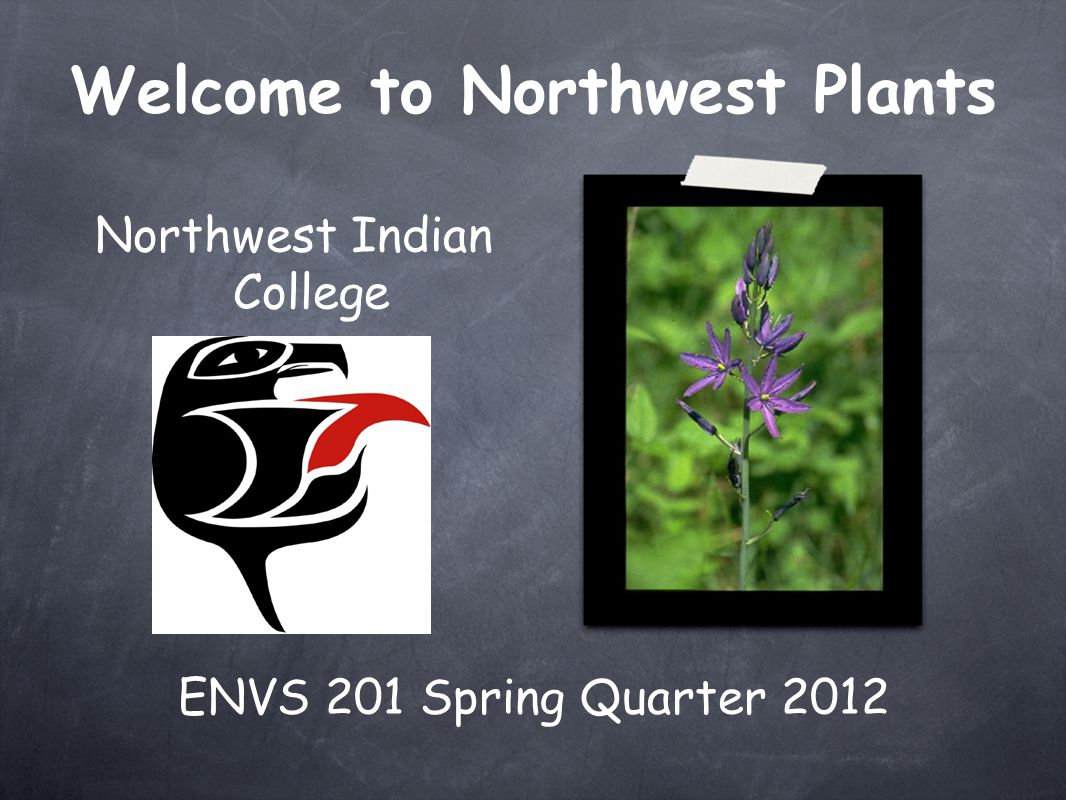 ENVS 201 Spring Quarter 2012 Northwest Indian College Welcome to Northwest Plants
