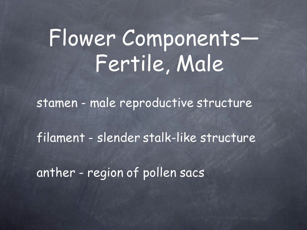 Flower Components— Fertile, Male stamen - male reproductive structure filament - slender stalk-like structure anther - region of pollen sacs