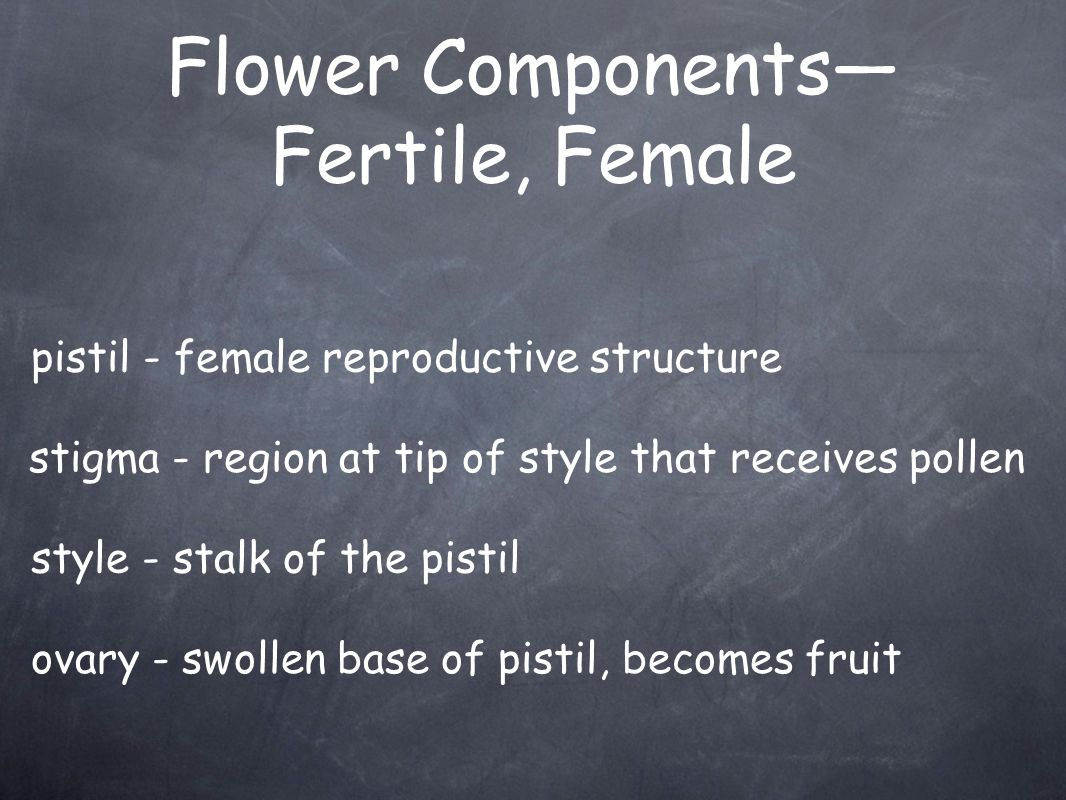 Flower Components— Fertile, Female pistil - female reproductive structure stigma - region at tip of style that receives pollen style - stalk of the pi