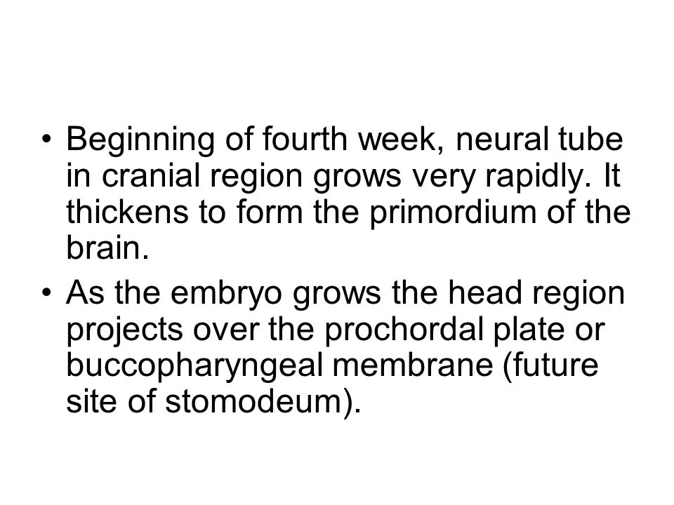 Beginning of fourth week, neural tube in cranial region grows very rapidly. It thickens to form the primordium of the brain. As the embryo grows the h