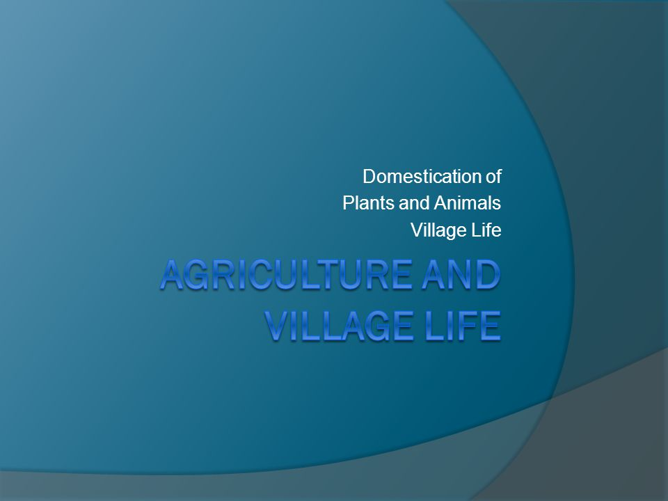 Domestication of Plants and Animals Village Life