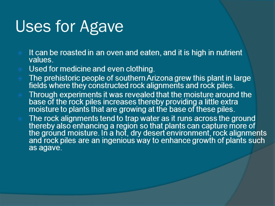 Uses for Agave  It can be roasted in an oven and eaten, and it is high in nutrient values.