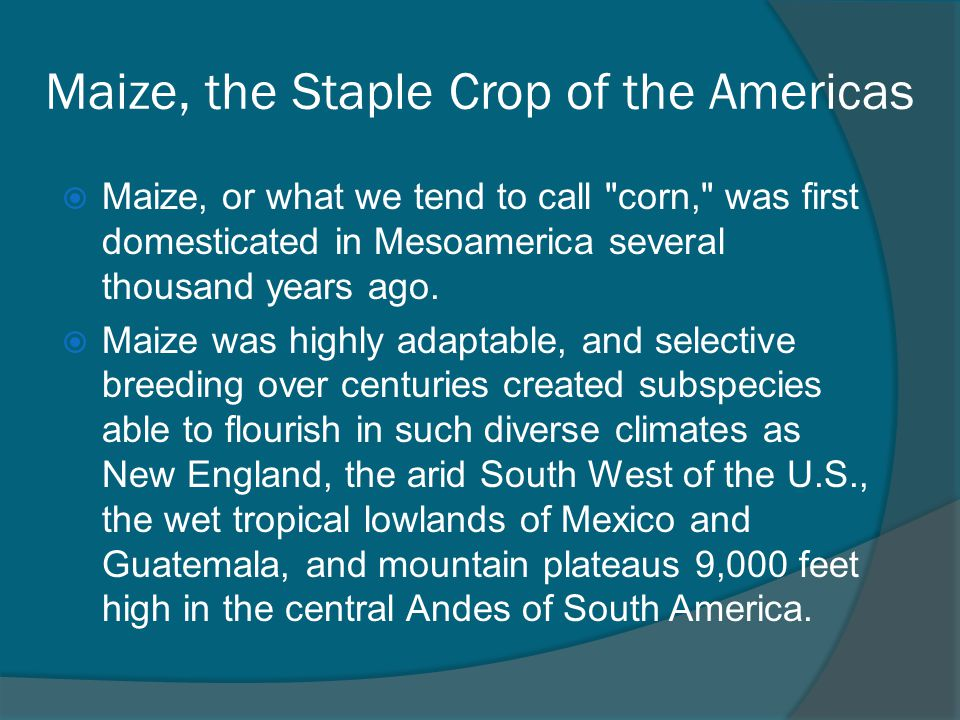 Maize, the Staple Crop of the Americas  Maize, or what we tend to call corn, was first domesticated in Mesoamerica several thousand years ago.