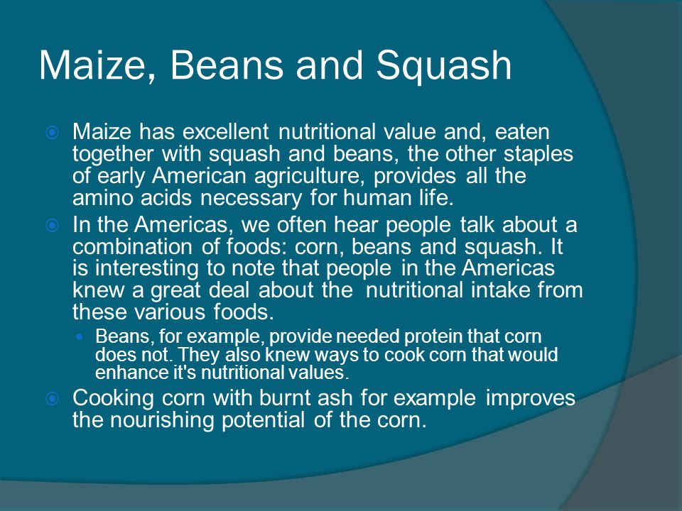 Maize, Beans and Squash  Maize has excellent nutritional value and, eaten together with squash and beans, the other staples of early American agriculture, provides all the amino acids necessary for human life.