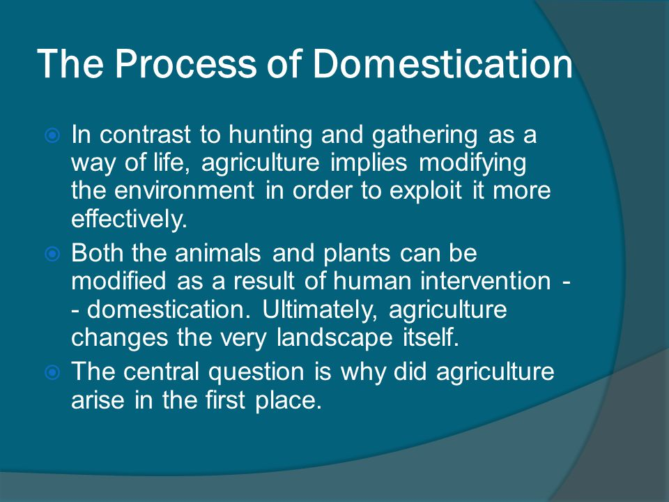 The Process of Domestication  In contrast to hunting and gathering as a way of life, agriculture implies modifying the environment in order to exploit it more effectively.