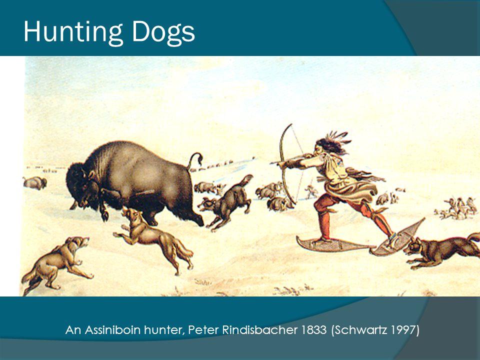 Hunting Dogs An Assiniboin hunter, Peter Rindisbacher 1833 (Schwartz 1997)