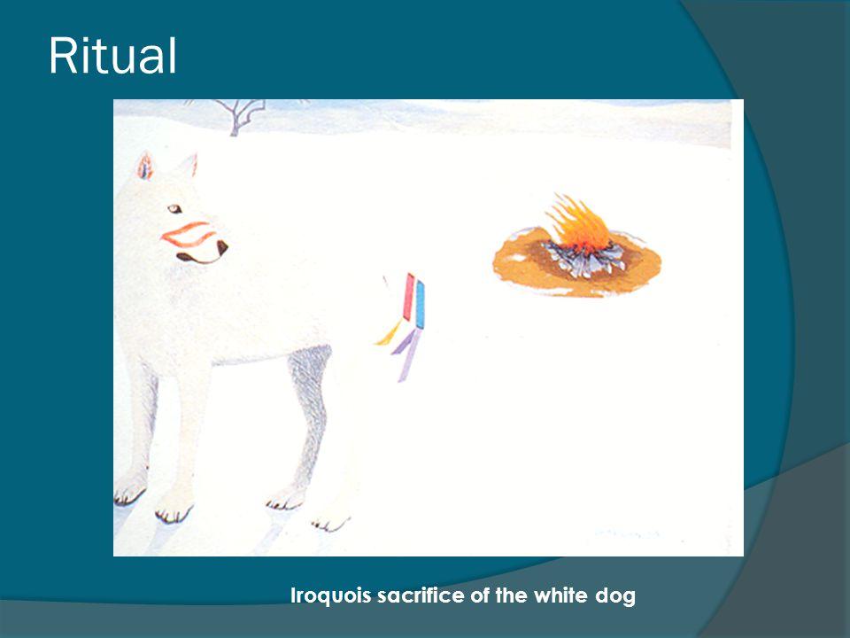 Ritual Iroquois sacrifice of the white dog