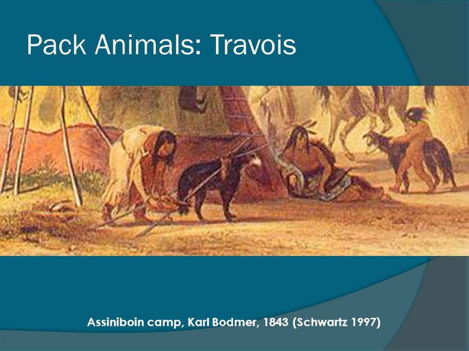 Pack Animals: Travois Assiniboin camp, Karl Bodmer, 1843 (Schwartz 1997)