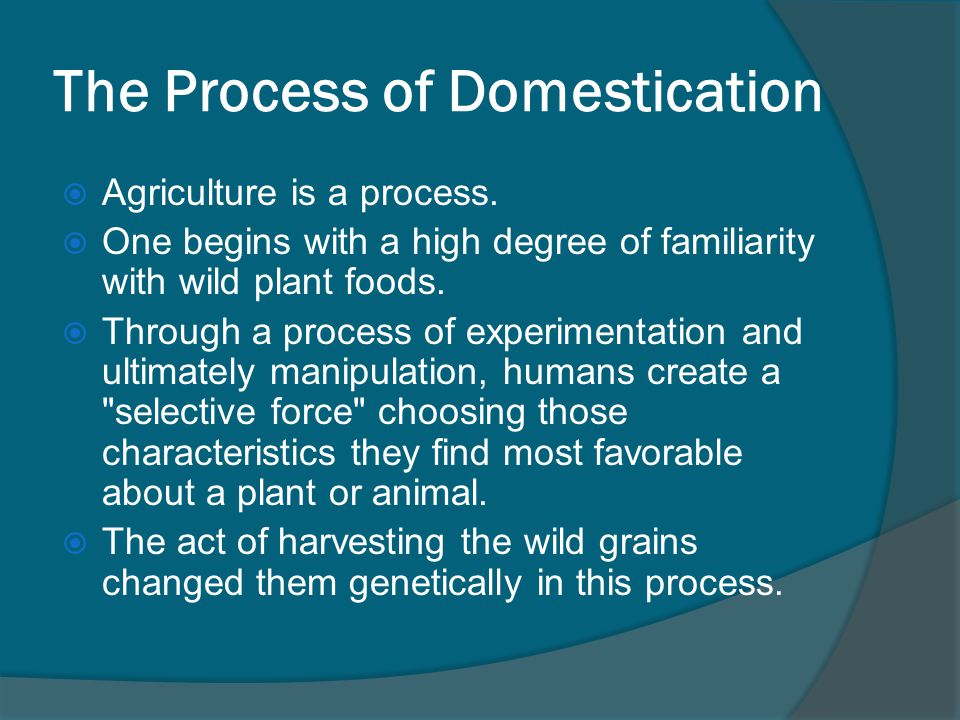 The Process of Domestication  Agriculture is a process.