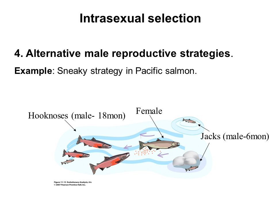 Intersexual selection (female choice)