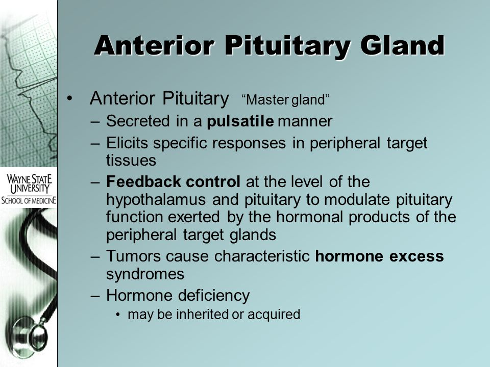 Anterior Pituitary Gland Anterior Pituitary Master gland –Secreted in a pulsatile manner –Elicits specific responses in peripheral target tissues –Feedback control at the level of the hypothalamus and pituitary to modulate pituitary function exerted by the hormonal products of the peripheral target glands –Tumors cause characteristic hormone excess syndromes –Hormone deficiency may be inherited or acquired