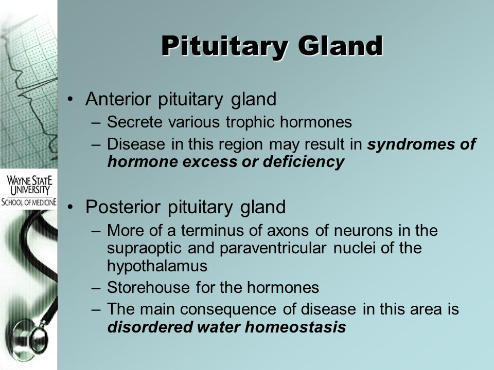 Pituitary Gland Anterior pituitary gland –Secrete various trophic hormones –Disease in this region may result in syndromes of hormone excess or defici