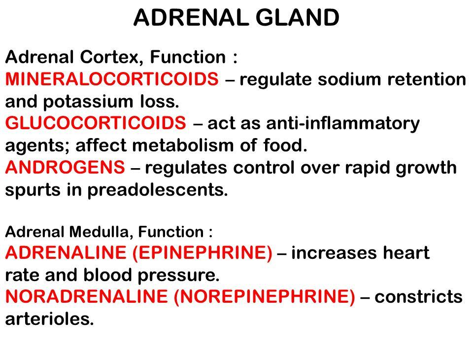 ADRENAL GLAND Adrenal Cortex, Function : MINERALOCORTICOIDS – regulate sodium retention and potassium loss. GLUCOCORTICOIDS – act as anti-inflammatory