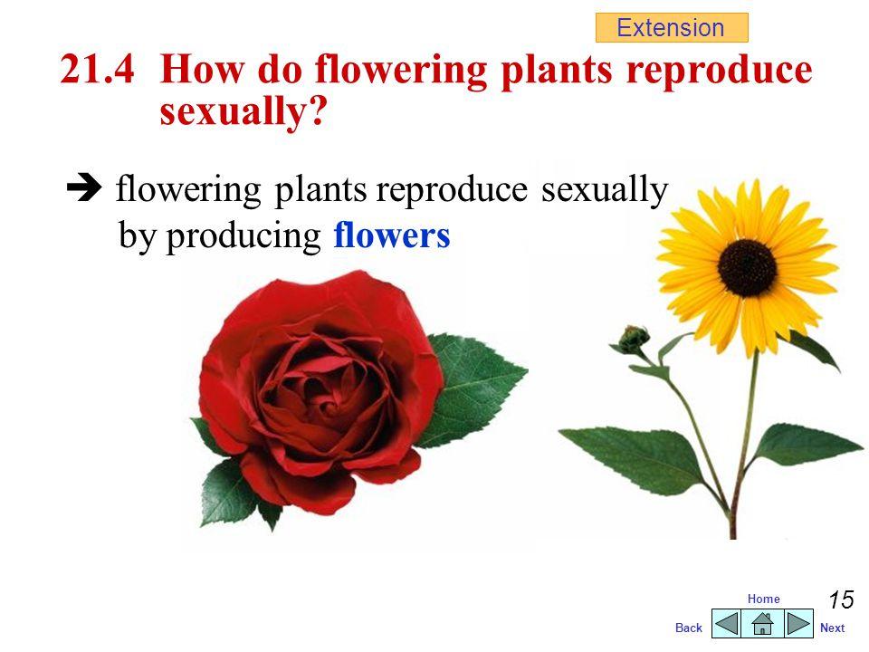 BackNext Home 14 Artificial vegetative propagation  vegetative propagation carried out artificially  produce desired varieties  e.g.