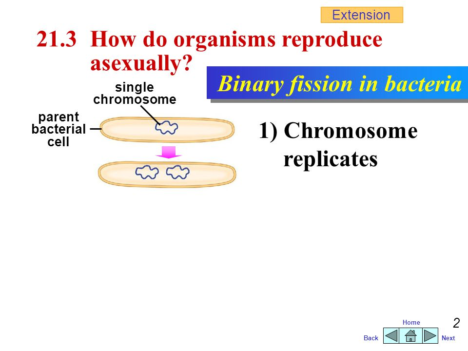 BackNext Home 1 21.2 What are the types of reproduction? AsexualSexual involves one parent involves no gametes offspring are genetically the same as t