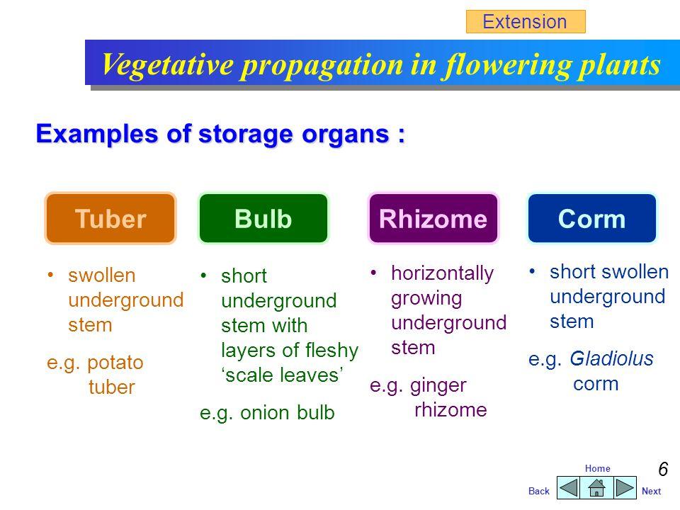 BackNext Home 5 Vegetative propagation in flowering plants  vegetative parts (e.g.