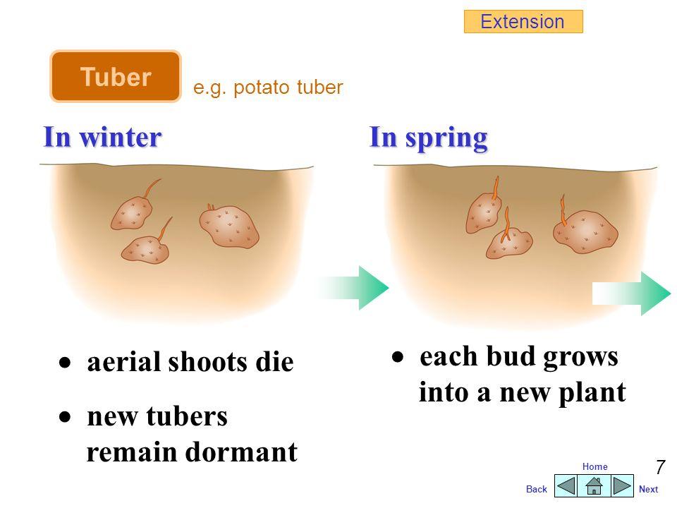 BackNext Home 6 Examples of storage organs : TuberBulbRhizomeCorm swollen underground stem e.g.