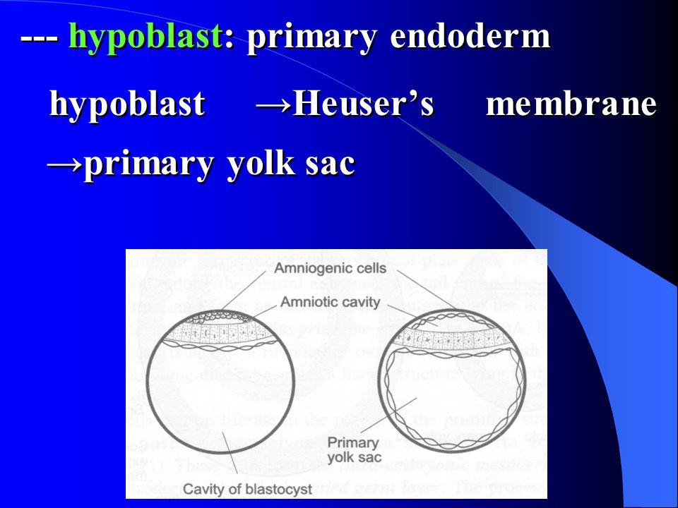 --- hypoblast: primary endoderm hypoblast →Heuser's membrane →primary yolk sac --- hypoblast: primary endoderm hypoblast →Heuser's membrane →primary yolk sac