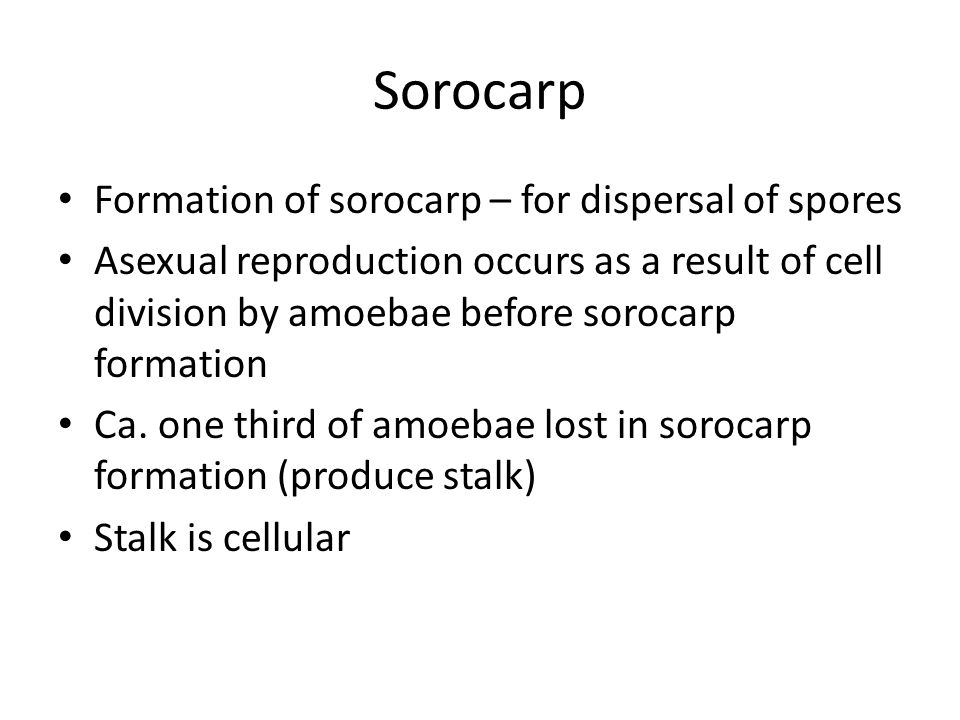 Formation of sorocarp – for dispersal of spores Asexual reproduction occurs as a result of cell division by amoebae before sorocarp formation Ca.
