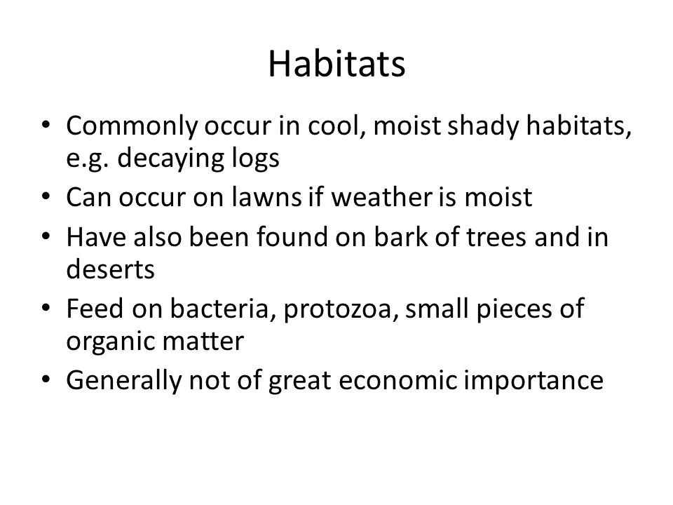 Habitats Commonly occur in cool, moist shady habitats, e.g.