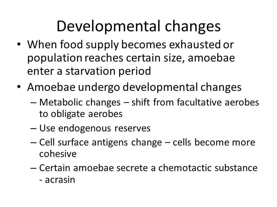 Developmental changes When food supply becomes exhausted or population reaches certain size, amoebae enter a starvation period Amoebae undergo developmental changes – Metabolic changes – shift from facultative aerobes to obligate aerobes – Use endogenous reserves – Cell surface antigens change – cells become more cohesive – Certain amoebae secrete a chemotactic substance - acrasin