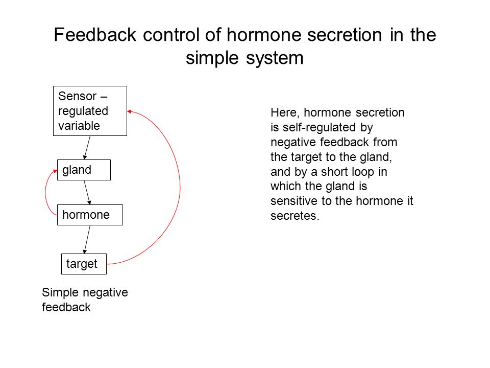 Feedback control of hormone secretion in the simple system Sensor – regulated variable gland hormone target Simple negative feedback Here, hormone secretion is self-regulated by negative feedback from the target to the gland, and by a short loop in which the gland is sensitive to the hormone it secretes.