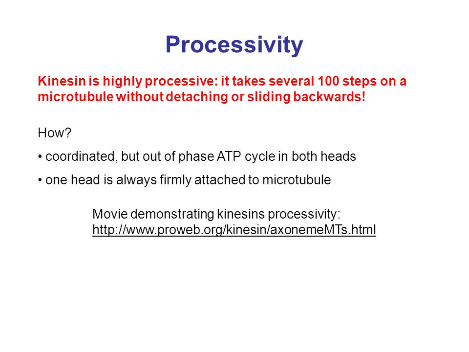 Processivity Kinesin is highly processive: it takes several 100 steps on a microtubule without detaching or sliding backwards! How? coordinated, but o
