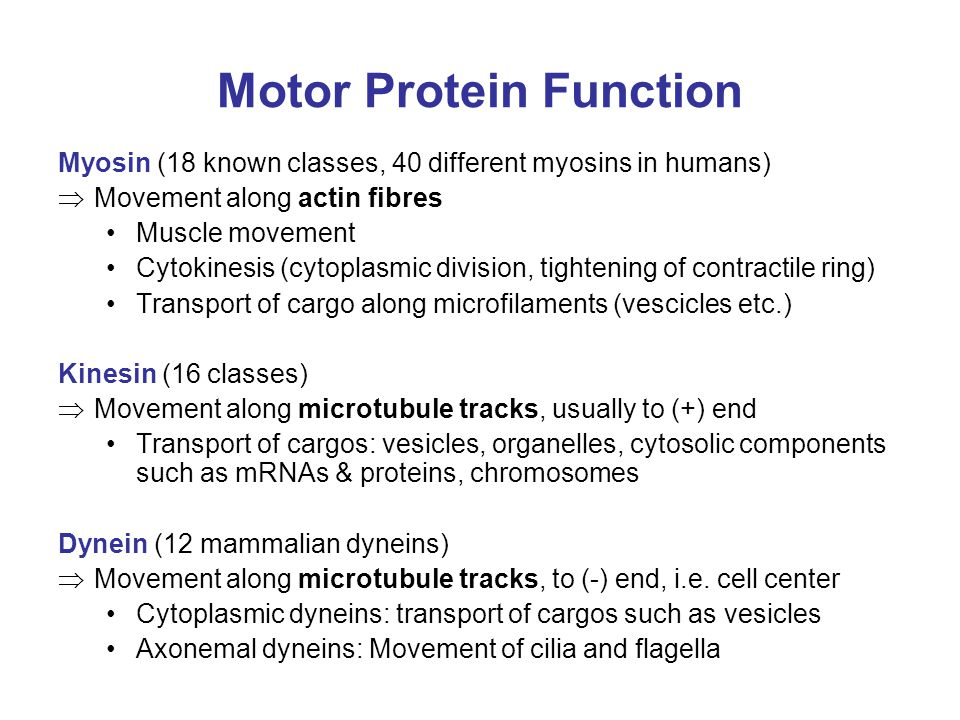 Motor Protein Function Myosin (18 known classes, 40 different myosins in humans)  Movement along actin fibres Muscle movement Cytokinesis (cytoplasmic division, tightening of contractile ring) Transport of cargo along microfilaments (vescicles etc.) Kinesin (16 classes)  Movement along microtubule tracks, usually to (+) end Transport of cargos: vesicles, organelles, cytosolic components such as mRNAs & proteins, chromosomes Dynein (12 mammalian dyneins)  Movement along microtubule tracks, to (-) end, i.e.