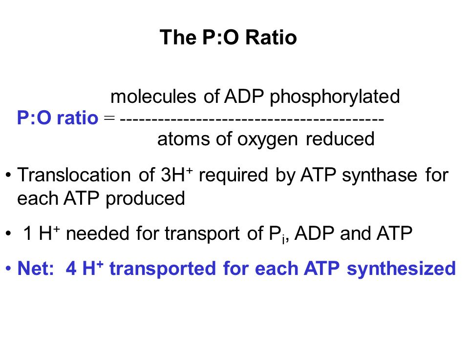 The P:O Ratio molecules of ADP phosphorylated P:O ratio = ----------------------------------------- atoms of oxygen reduced Translocation of 3H + required by ATP synthase for each ATP produced 1 H + needed for transport of P i, ADP and ATP Net: 4 H + transported for each ATP synthesized