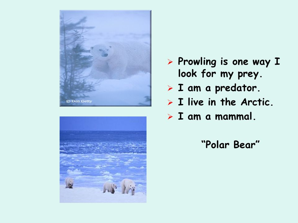  Prowling is one way I look for my prey.  I am a predator.  I live in the Arctic.  I am a mammal.