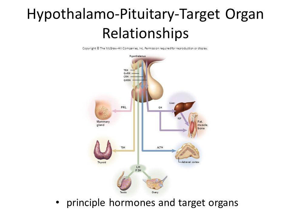 Hypothalamo-Pituitary-Target Organ Relationships Figure 17.6 GH ACTHTSH Liver TRH GnRH CRH Hypothalamus Adrenal cortex OvaryTestis Thyroid IGF GHRH PRL Mammary gland Fat, muscle, bone LH FSH principle hormones and target organs Copyright © The McGraw-Hill Companies, Inc.